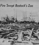 Bostock's Zoo After the Fire