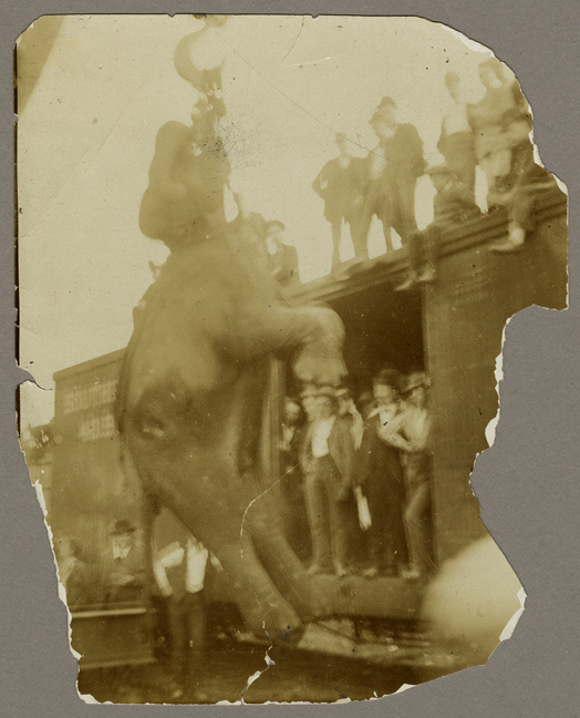 SVF Animals Elephant 1900 (Hanging)