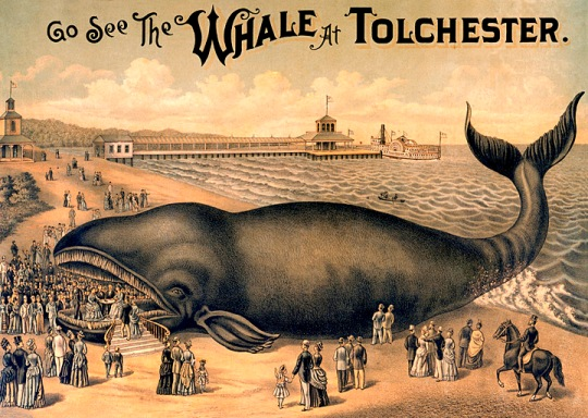 """Go See the Whale at Tolchester"", lithograph by R.H. Eichner & Company, 1889, Large Prints, Maryland Historical Society."